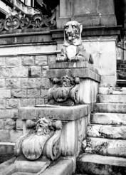 Lion den-Romania