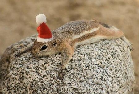 Antelope Squirrel Christmas cap