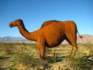 Avery camel