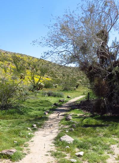 Trail aside the elephant tree