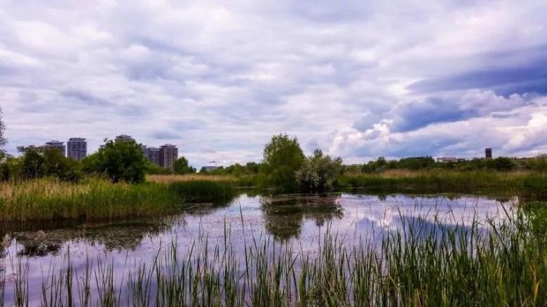 Lake Văcărești Bucharest Romania