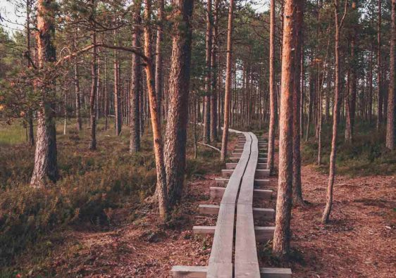 Why you should put Estonia on your travel bucket list