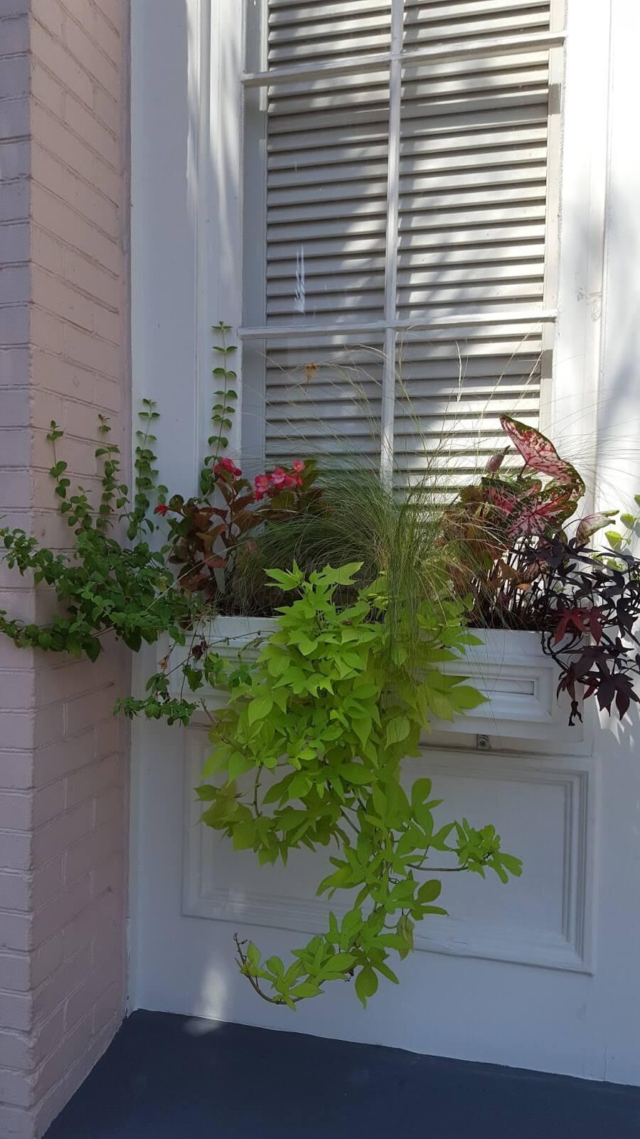 Beautiful window box in Charleston, South Carolina