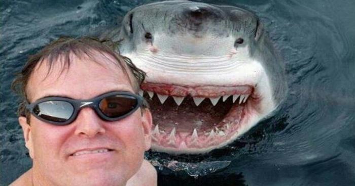 selfie, requin