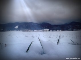 light in front of the bavarian mountains