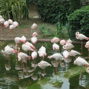 flamingos in park