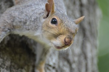 squirrel-1225970_640