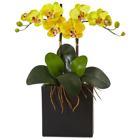Double Mini Phalaenopsis in Black Vase 1483