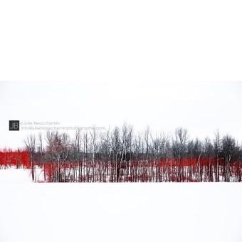 A l'oree du bois rouge © Julie Beauchemin