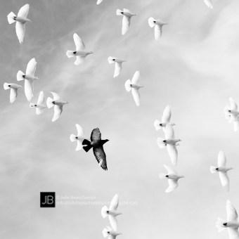L_etranger_800px_©Julie_Beauchemin