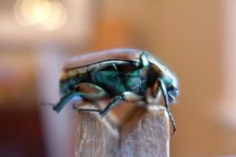 08.06.13 | i had a little beetle