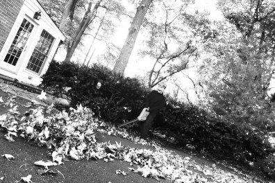 11.08.14 | someone discovered the leaf blower