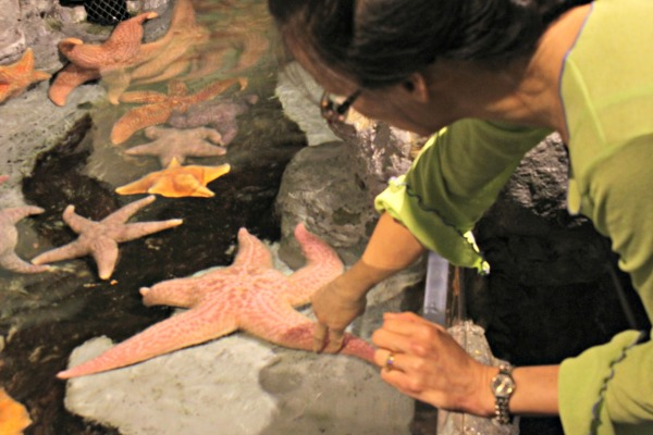 julia touches a seastar at the sheddjulia touches a seastar at the shedd