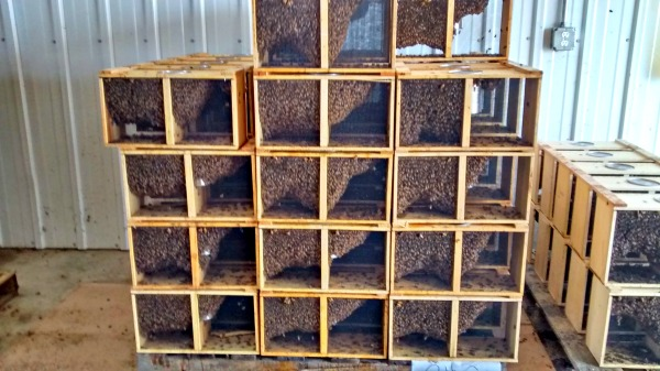 blog package stacks #Iowa honey #bee #farmherlife