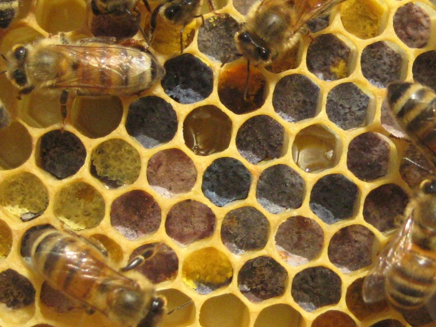 pollen, honey bees, honey comb