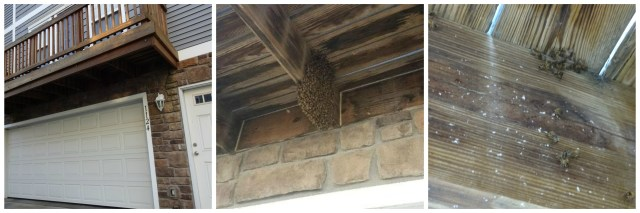 honey bees, swarm