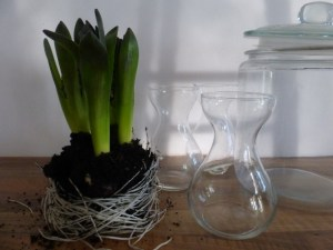 DIY_indoor_spring_bulbs