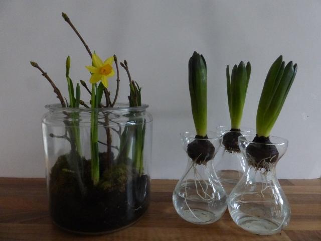 DIY_indoor_spring_bulbs