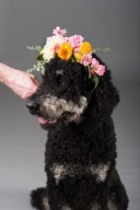 dog_wearing_flower_crown