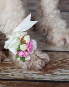 dog_wearing_paw_corsage