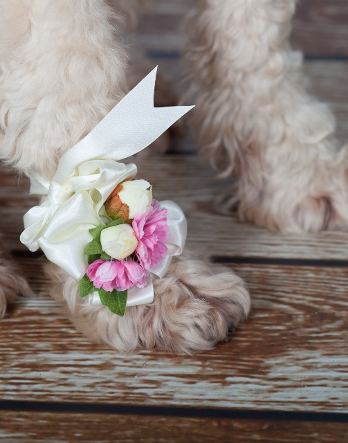 dog_wearing_paw_corsage