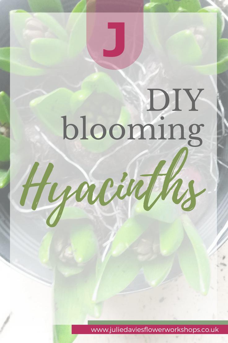 DIY blooming hyacinths