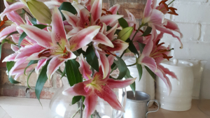 looking after lilies