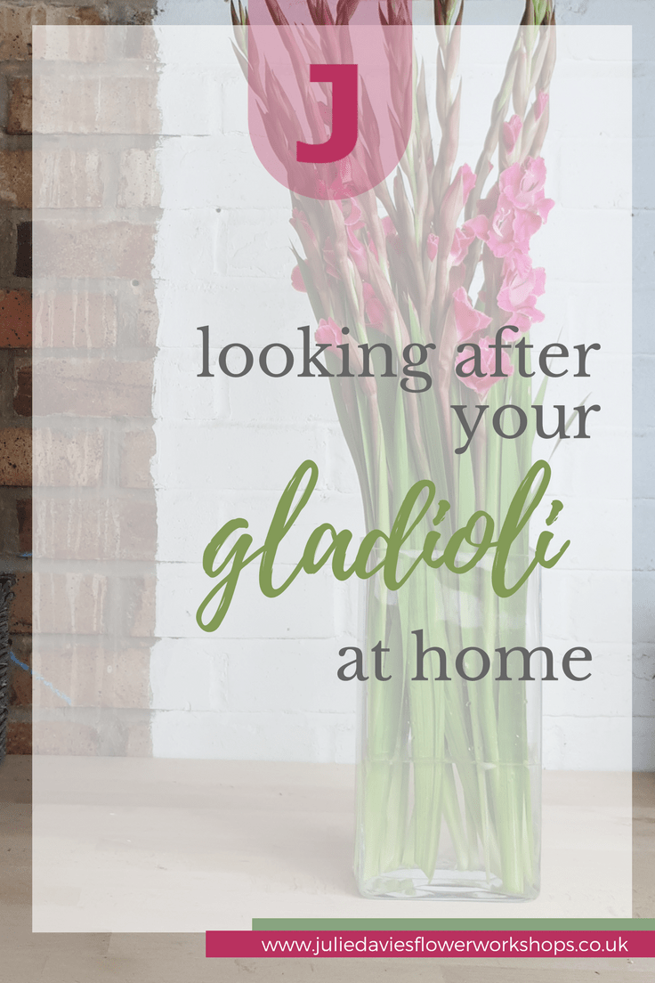 How to look after Gladioli