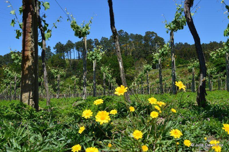 Vineyards, Melgaço
