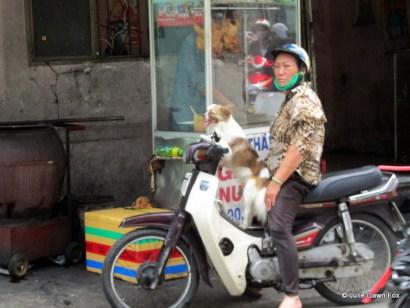 Dog on a motorbike