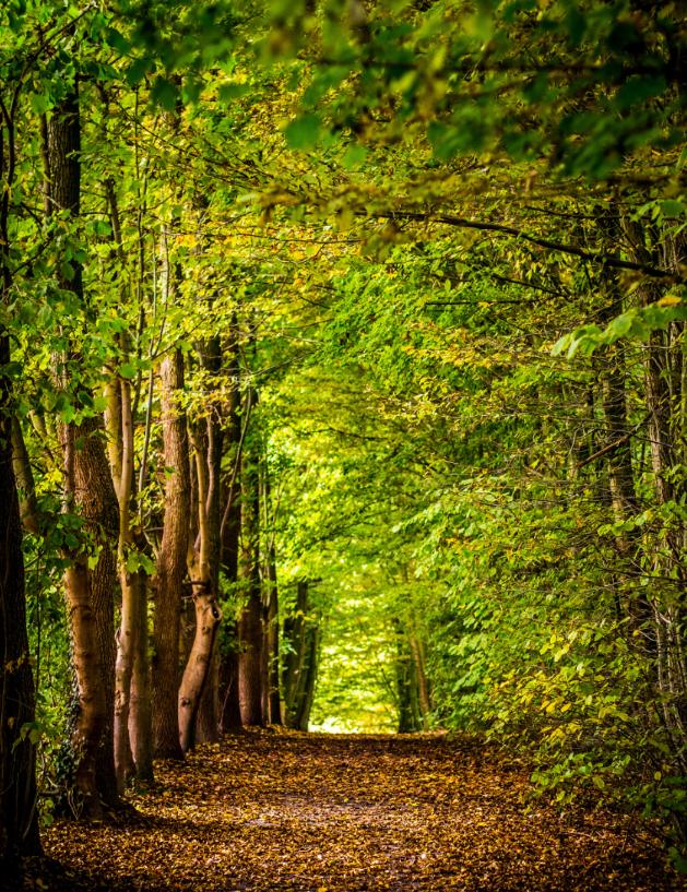 Balade en forêt pour réduire le burnout parental