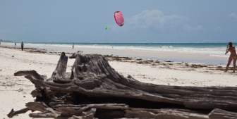 beach driftwood