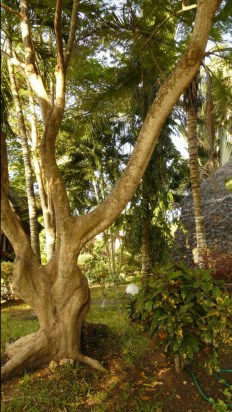 apt2 garden