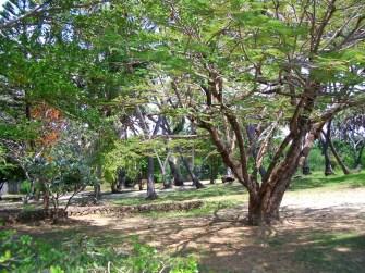 Grewal Nyali House - 4