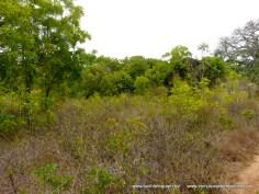Kilifi Creek plot7