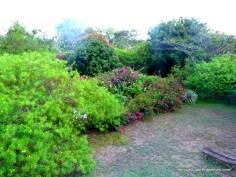 garden-from-terrace