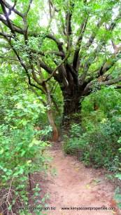 path to tree