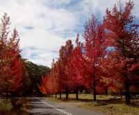 Blue Mountains Autumn