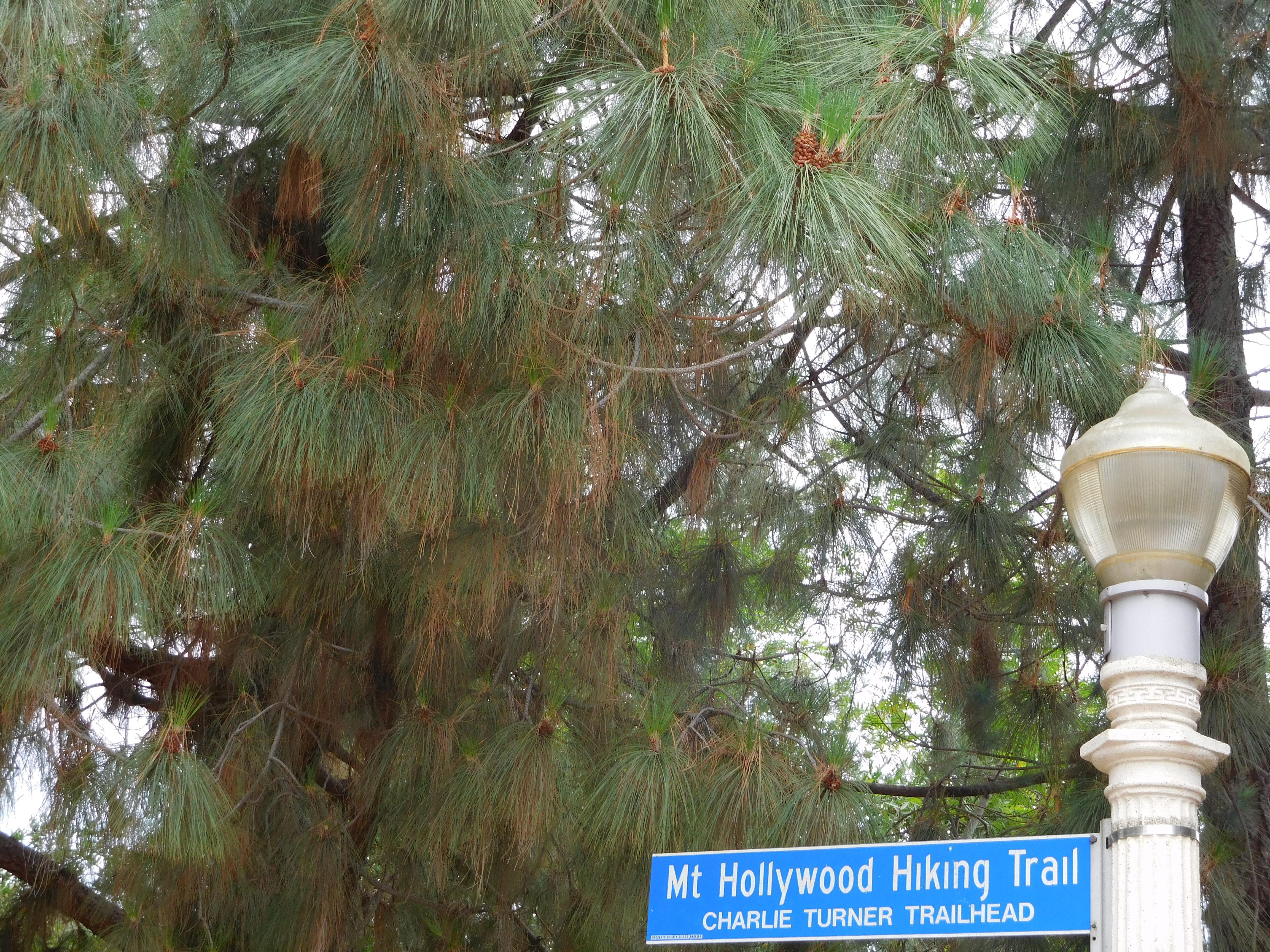 Griffith Park and Trails Café   Julie Journeys