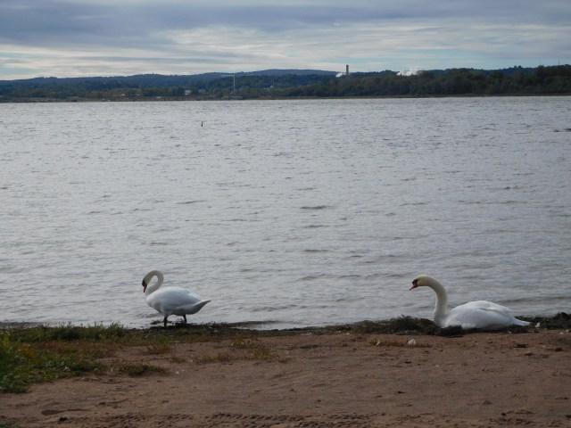 onondaga lake park 2