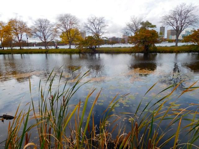 Charles_River_Esplanade_4