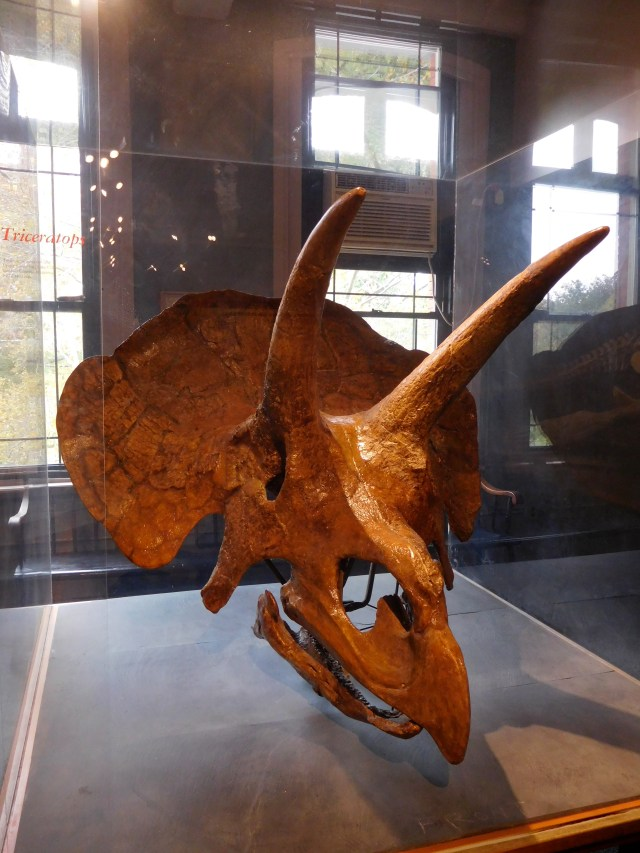 Harvard_Museum_of_Natural_History_11