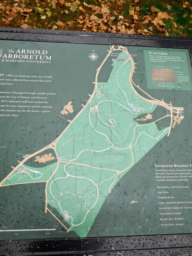 arnold_arboretum_3