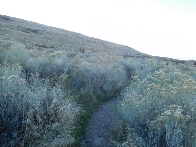 lake_side_trail_antelope_island_