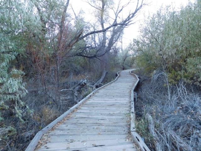 matheson_wetlands_preserve_moab_2