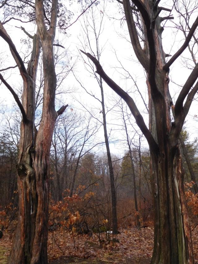 Mohawk_Landing_Nature_Preserve_2