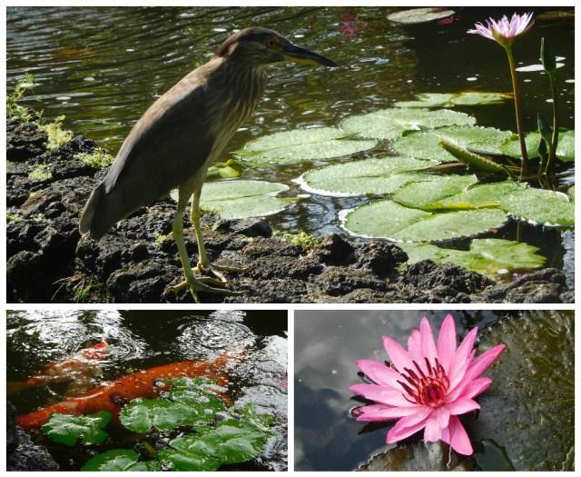 kiuhana_plantation_gardens_kauai_