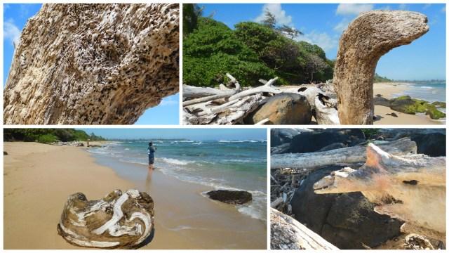 lydgate_beach_driftwood
