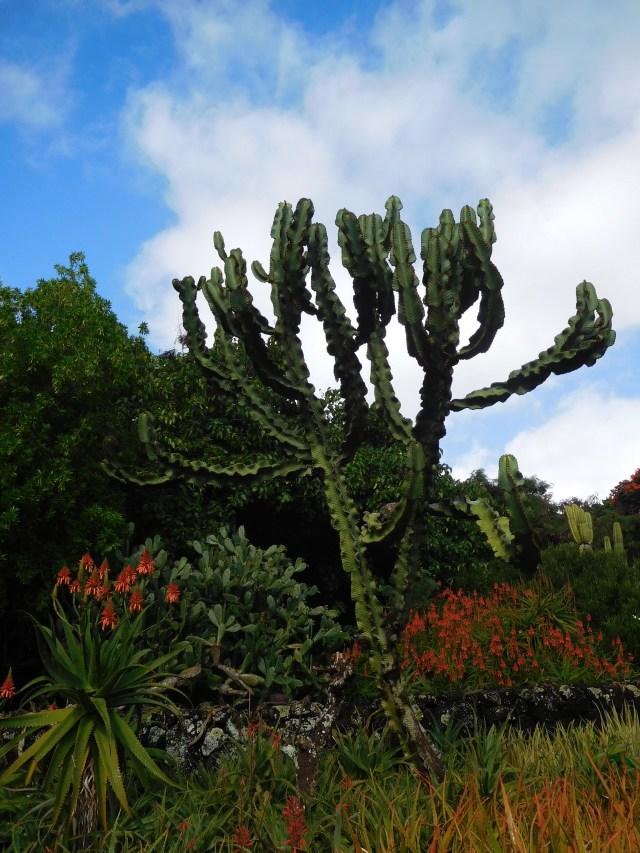 moir_gardens_kauai_2