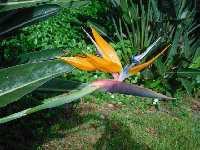 moir_gardens_kauai_4